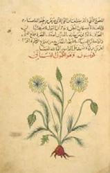 arab3