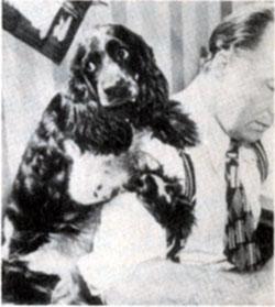 mghl_dog 2