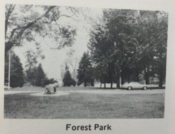 image-11-forest-park