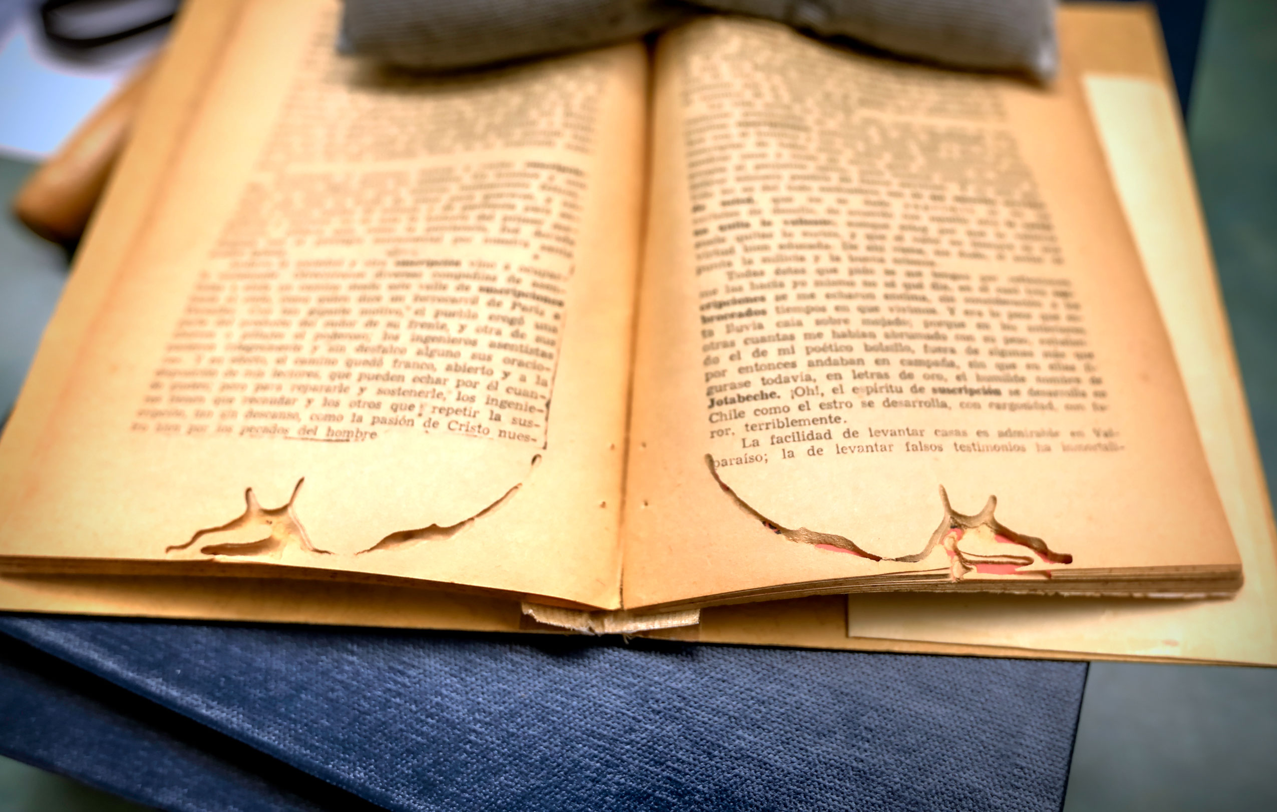 An example of damage done to the pages of a book by a beetle.