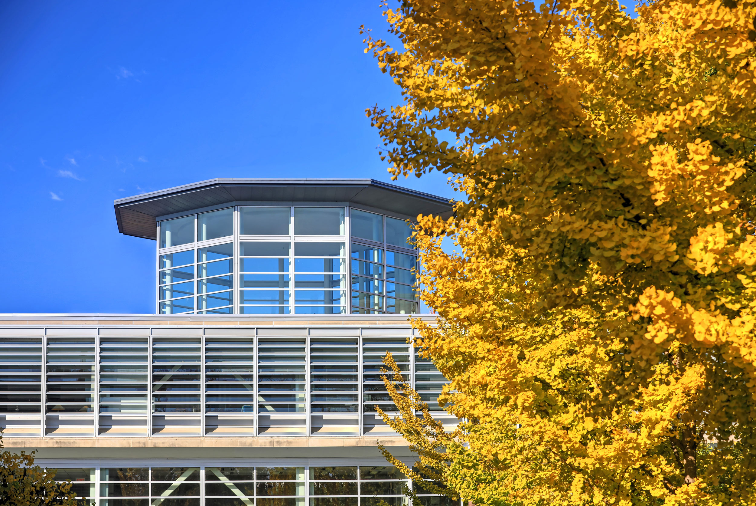 Exterior roof of the Olin Library with a yellow ginkgo tree.