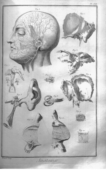 A plate illustrating human anatomy from Encyclopédie.