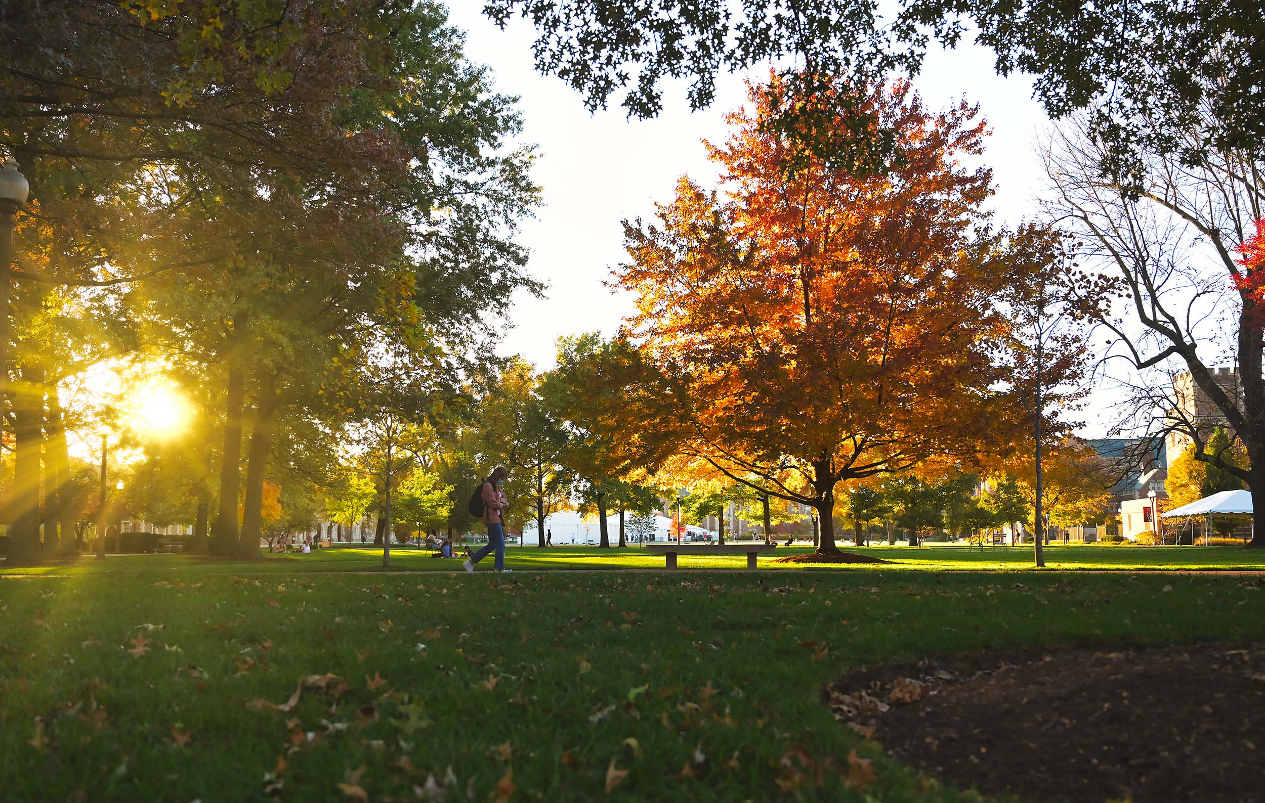 Fall foliage on the Danforth Campus.
